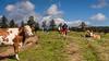 cows are watching (Renate Bomm) Tags: 7dwf animal canoneos50d kühe landscapes landschaft renatebomm sky suedtirol tiere tirol wandern weide wolken ef28135mm ngc