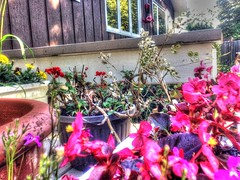 2017-09-21 15.27.08 (74prof) Tags: hdr mushrooms flowers fall facetime