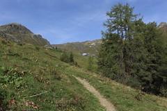 arrivée à Bendolla (bulbocode909) Tags: valais suisse grimentz bendolla valdanniviers montagnes nature sentiers alpages arbres mélèzes paysages vert bleu cabanedesbecsdebosson