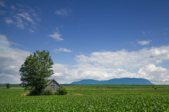 St-Charles sur Richelieu, Barn, Summer (Irrational Photography) Tags: montreal quebec city canada photo picture blue sky cloud clouds photography saint charles saintcharles stcharles st hilaire dinde mais maïs barn granche wood tree barren corn cornfield spring summer warm day beautiful green canon slr dslr 5d mark iii 3 digital lens richelieu montérégie valley river region landscape pink floyd wish you were where here vallée vallee surrichelieu sthilaire sainthilaire mountain montagne field leaf leaves champ champs blé 7dwf irrational