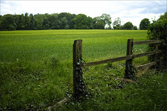 Summer on the Droveway (meniscuslens) Tags: tring drove path tarck field fence wood forest countryside sky clouds ivy