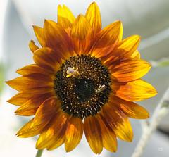 trends (Lanamcara) Tags: bees bee gamewinner challengefactorywinner