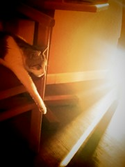 Starling cat (Laura Shindollar) Tags: light rays kitty cat tabby
