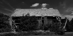 death will have his day.... (BillsExplorations) Tags: death decay abandoned ruin sickness williamshakespeare richardii barn farm forgotten neglect discarded ruraldecay ruraldeterioration abandonedillinois abandonedfarm blackandwhite monochrome woe destruction