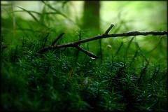 Green Inferno (Herr Nergal) Tags: tags hinzufügen fz1000 lumix panasonic bridge saarland sensor macro makro close up forest wald boden ground grün green flora fauna 7dwf