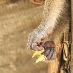 Wat Khao Takiap Monkeys thumbnail