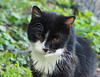 Kuba Prinz Felix (arjuna_zbycho) Tags: felix blackcat tuxedo tuxedocat kater hauskatze cat animal cute animals pets gato kitten feline kitty kittens pet tier haustier katzen gattini gatto chat cats