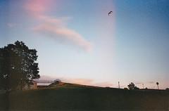 Plenitude (GrailK) Tags: contax139 argentique colours plainesdabraham québec canada sunset vol oiseau bird analog film superia fujifilm 400iso 28mm plénitude ciel sky
