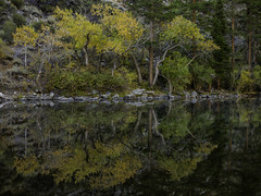 Silver Lake Reflections (rianklong) Tags: canon5dmarkii canoneos5dmarkii canonef2470mmf28liiusm junelake junelakeloop silverlake silver lake autumn fall foliage leaves yellow fog morning cold nature landscape water reflection reflections