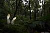 Stinkhorn (Mike Mckenzie8) Tags: phallus impudicus british uk fungi fungus wild woodland forest autumn bracken moss fern canon wide angle macro