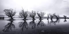 Glenorchy, New Zealand, South Island. (Aaron Bishop Photography) Tags: blackandwhite bw glenorchy southisland water willow reflection trees monochrome moody mono aotearoa newzealand newzealandnorth