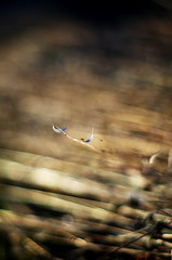 harvest (Stefano Rugolo) Tags: stefanorugolo pentax k5 smcpentaxm50mmf17 abstract harvest field bokeh summer 2015 countryside lazio italy airplane bird wood sky aircraft