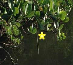 Mangroves Figure 2a