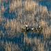 Pescadores do Lago Skadar