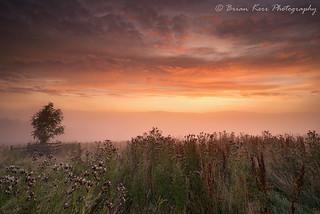 Eden Valley Sunrise