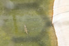 matanzas-10.jpg (BradPerkins) Tags: crocodilefarm crocodile cuba animals