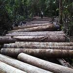 Logs thumbnail