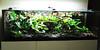 Terrário Tropical úmido - Dendrobates - 160x60x60 (seemanni.terrarios) Tags: terrários terrarios terrario terrário iguana iguanas jiboia cornsnake leopardgecko jabuti tartaruga repteis