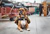 Service Dog Midas (adventuredogphoto) Tags: dog faithful companion loyal dogphotography workingdog servicedog dogphotographer boston ussconstitution massachusetts boxer professionaldogphotography commercialdogphotography