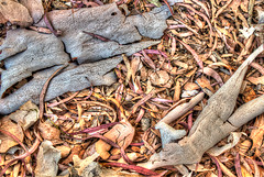 2017-220 Euclyptus Leaves and Bark (Terry Straehley) Tags: efm18150mmf3563isstm canonm5 geotagged hdr project365 exif:focallength=30mm exif:model=canoneosm5 exif:lens=efm18150mmf3563isstm camera:make=canon geocity geostate geo:lon=119703325 geocountry camera:model=canoneosm5 exif:isospeed=200 geolocation geo:lat=3442398333 exif:aperture=ƒ80 exif:make=canon project365080817