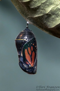 Nature's Perfect Jewelry
