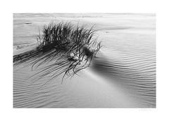 * unknown painter (light-square) Tags: unknownpainter unbekanntermaler impression sand wind beach strand nordsee northsea europa monochrome schwarzweis blackandwhite nature germany