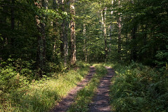 A Walk in the Woods (Aymeric Gouin) Tags: canada québec orford parc park sepaq landscape paysage forest wood foret tree arbre nature vert green light lumière landschaft paisaje travel voyage hike hiking randonnée fujifilm xt2 aymgo aymericgouin outdoors