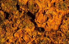 Mars Rock (mdcaptures) Tags: mars oxidation ferrous iron martian flake corrode orange 85mm samyang rust focus 4image stack oxide macromondays