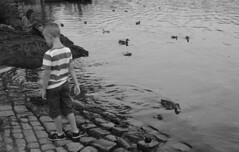small hands that feeding ducks (mustafaemek) Tags: people kid boy duck animal bird river small monochrome blackandwhite black bnw photographer perfectphotographer travel explore