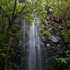 (RicardoPestana2012) Tags: waterfall nature laurissilva levadadoscedros madeira madeiraisland