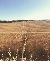 Crete Senesi view! At only 40 km from @borghettobb 😍 a true paradise! #like #follow #cretesenesi #siena #tuscany #italy #myworld #travel #landscape #enjoy #nature #discover 👍🌾 (borghettob) Tags: like follow cretesenesi siena tuscany italy myworld travel landscape enjoy nature discover