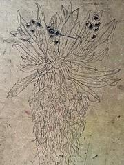 Espeletia pycnophylla (lauramurillom) Tags: páramo plantas flora plantlife plant natura art arte dessin disegno zeichnung dibujo drawing nature naturaleza nevado espeletia frailejón