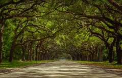 Wormsloe Plantation (Brandon Westerman WNP) Tags: wormsloe historic site state park savannah georgia south scenic scenery scenicnature nature natur trees live oak amazing beautiful road nikon d3200 landscape summer light green flickr smilesonsaturday treesinthepicture tree forest woods