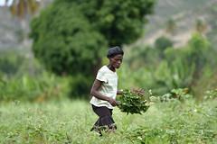 NP_Haiti2