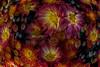 autumn flowers (mariola aga) Tags: chicagobotanicgarden glencoe garden autumn flowers buds macro closeup art distortion alittlebeauty coth naturethroughthelens coth5 thegalaxy