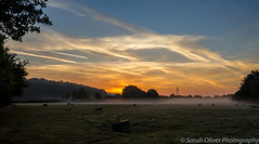 A misty sunrise this morning (SarahO44) Tags: 6d canon clouds constable countryside early england field flatford iphoto john kingdom landscape low mill mist morning national nature outdoors sheep suffolk sunrise trees trust uk united