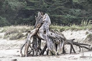 Fighting horses/beach stump