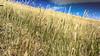 Details from Etna Mount, Sicily - Italy (DiSorDerINaMirrOR) Tags: details nature natura naturephotography naturepics natural beautyofnature etna wild wilderness intothewild sony sonyalpha sonyalpha6000 sicily sicilia italy italia italien catania volcano vulcano hiking climbing summer discover adventure travel wanderlust