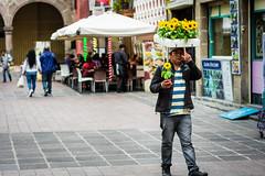 Solo una flor - Just one flower (DanArellano) Tags: gente people sunflower sunflowers girasoles flor coyoacan mexico cdmx streetshot streetphoto streetphotography streets afnikkor50mmf18d 50mm nikond3400 nikon