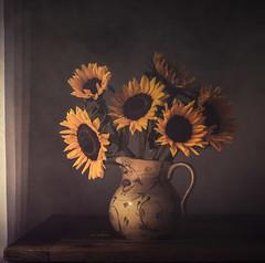 Sunning the flowers (jm atkinson) Tags: texturetuesday jaijohnsontexture sunflowers window table still life vase