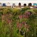 Kingsdown beach huts (6/17 ay17)