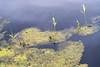 170907_012 (123_456) Tags: hitland capelle aan den ijsel nieuwerkerk natuur recreatie gebied