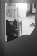 "Strenght of ""Lady"" (Shooting in RAW) Tags: cane luce bianconero bw pet dog amici animali amicizia lupo casa cortile monochrome"