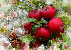 apples in red (HocusFocusClick) Tags: apples appletree red painterly nature green white leaves fruits digitalart art creation