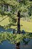 EOG-39.jpg (Joel Spooner Photography) Tags: arblife arborist bc expeditionoldgrowth joelspooner joeliphoto climbtrees exploretrees explorebc inspire learntoclimb oldgrowth treeclimbing