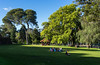 Perth: King's Park (Amir Nurgaliyev) Tags: perth kingspark australia