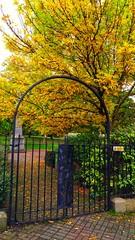Gateway to the fall (Nezhat Mahdavi) Tags: gateway fall autumn london ngc nature yellow cmwd cmwdyellow