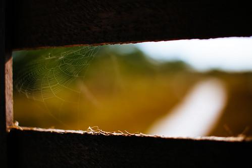 Spider's loft