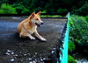 ,, Mama ,, (Jon in Thailand) Tags: green teal jungle deepjungle mama queenofthejungle dogears dogsmile happydog realhappydog k9 upontheroof thedogpalace themonkeytemple nikon nikkor d300 175528 dogeyes dognose paws dogpaws swamp jungleswamp dog littledoglaughedstories