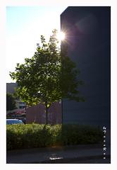 SHF_6327_Sunlight (Tuan Râu) Tags: 1dmarkiii 14mm 100mm 135mm 1d 1dx 2470mm 2017 50mm 70200mm tuấnrâu2017 canon canon1d canoneos1dmarkiii canoneos1dx quebec canada house street lighting nắng mây thuyền boat tuanrau tuan râu httpswwwfacebookcomrautuan71